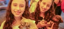 Mais de 10 cães foram adotados na última Feira de Adoção - Foto de Pedro Ferreira